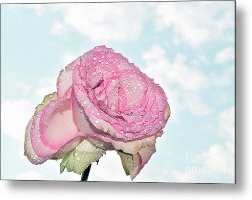 Flowers Metal Print featuring the photograph Beautiful Rose by Elvira Ladocki