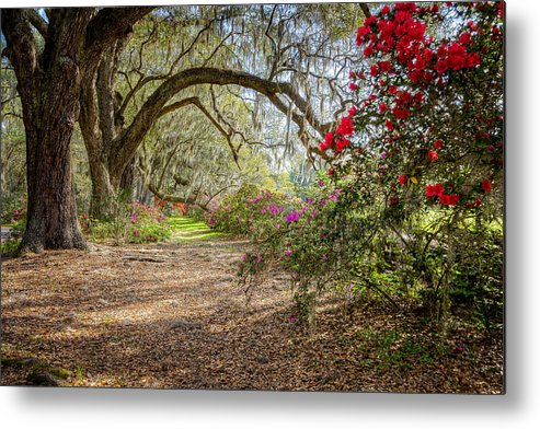 Metal Print featuring the photograph Charlston Sc - Magnolia Plantations And Garden by Jason Penland