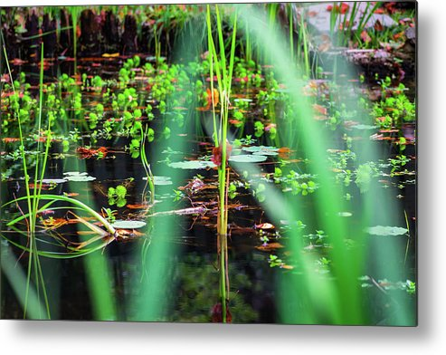 Water Metal Print featuring the photograph Japanese Garden by Jeff Chapman