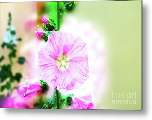 Fantasy Metal Print featuring the photograph Common Hollyhock by Humourous Quotes