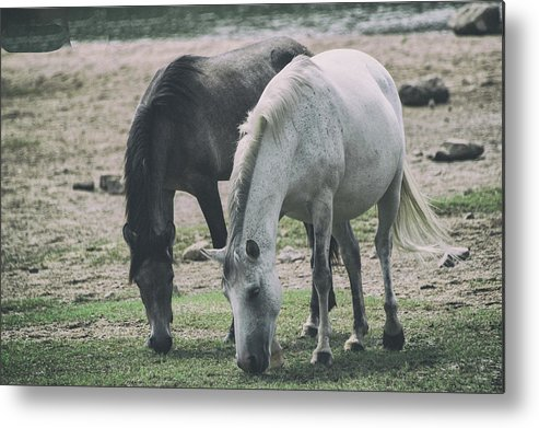 Horse Metal Print featuring the photograph Wild Mustangs by Marit Runyon