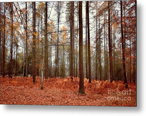 Svetlana Sewell Metal Print featuring the photograph Forest by Svetlana Sewell