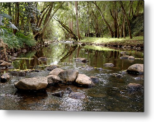 Nature Metal Print featuring the photograph Untitled by Kathy Schumann