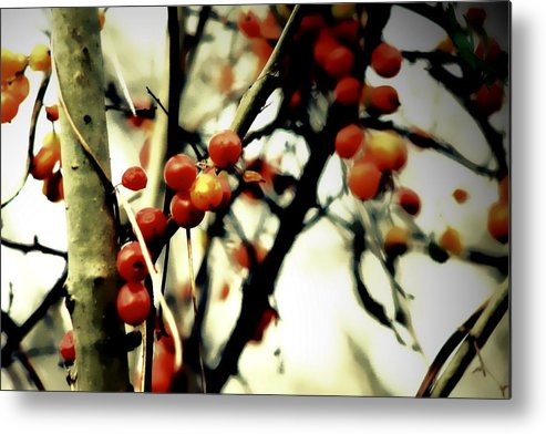 Wild Metal Print featuring the photograph Wild Berries by Frances Lewis