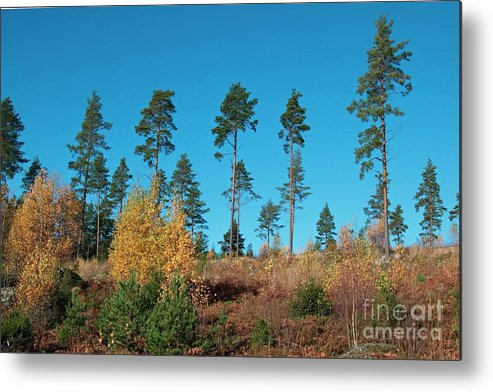 Trees Metal Print featuring the photograph Autumn by Esko Lindell