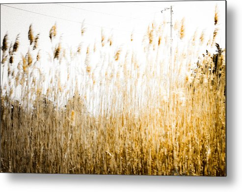 Sea Oats Metal Print featuring the photograph A Faded Memory by Colleen Kammerer