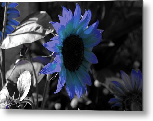 Sunflower Metal Print featuring the photograph A Little Fascinated Prince by Ming Yeung