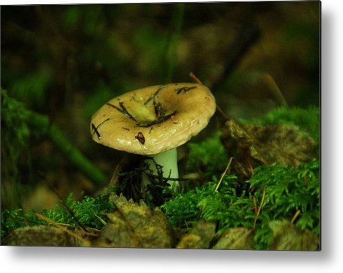Tiny Metal Print featuring the photograph A Little Wet Mushroom by Jeff Swan