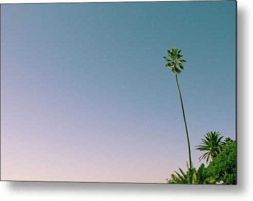 Palm Tree Metal Print featuring the photograph A Palm On Its Own by Matthew Wolf