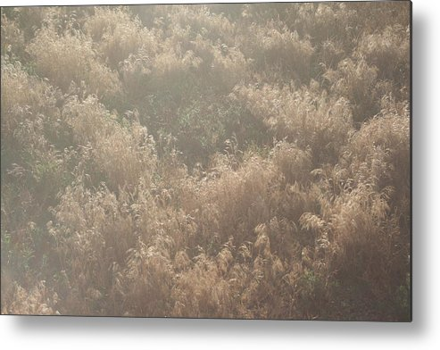 Plants Metal Print featuring the photograph A Rush by Ashlyn Yates