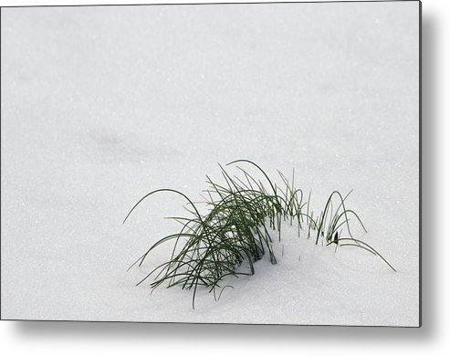 Photography Metal Print featuring the photograph A Speck Of Green by Michelle Maney