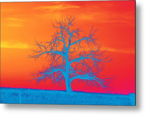 Abstract Metal Print featuring the photograph Abstract Single Tree Blue-orange by Mike Loudermilk