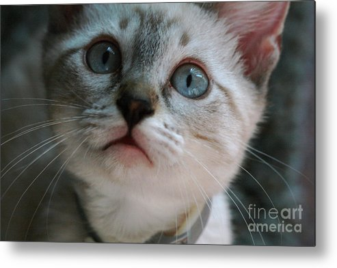 Cats Metal Print featuring the photograph Adorable Kitty by Kim Henderson