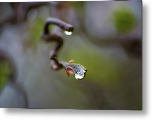 Metal Print featuring the photograph After The Rain - Branch Drop by Rebekah Mancino