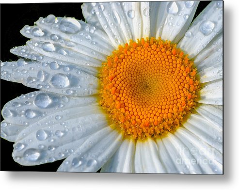 Flowers Metal Print featuring the photograph After The Rain by Neil Doren