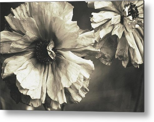 Metal Print featuring the photograph Age Of Change... by The Art Of Marilyn Ridoutt-Greene