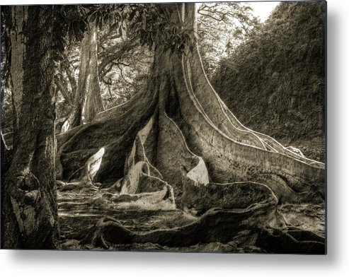 Fig Metal Print featuring the photograph All About The Roots by Allen Lefever