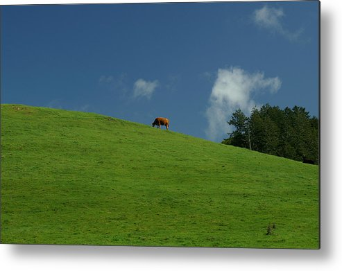 Cow Metal Print featuring the photograph Alone Again by David Armentrout