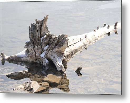 Tree Metal Print featuring the photograph Alone by Tiffany Vest