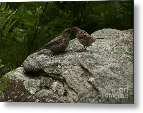 Birds Metal Print featuring the photograph An Unmatched Pair by B Rossitto