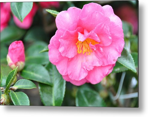 Floral Metal Print featuring the photograph And The Little One by Jan Amiss Photography