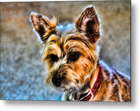 Nessa Metal Print featuring the photograph Anxiously Waiting by Michael Jefferson