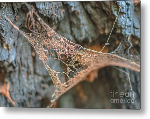Landscape Metal Print featuring the photograph Apathy by Lyudmila Prokopenko