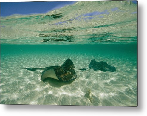 Atlantic Islands Metal Print featuring the photograph Aquatic Split-level View Of Two by Wolcott Henry