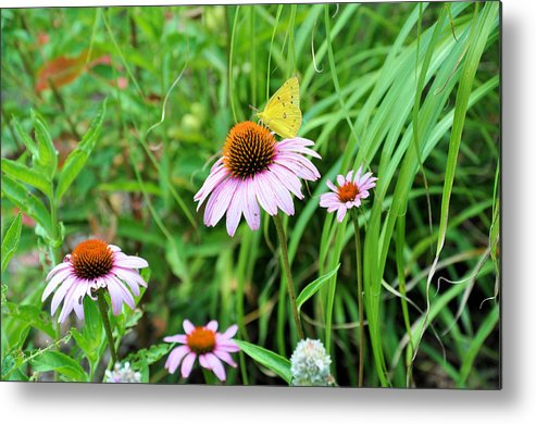 Gardens Metal Print featuring the photograph Arie's Garden by Jan Amiss Photography