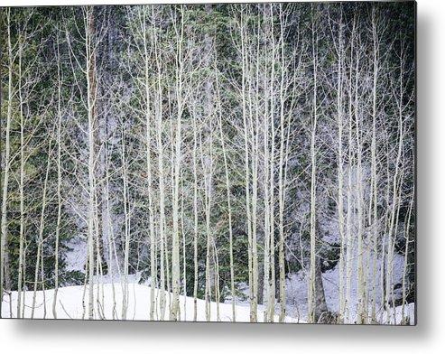 Aspen Trees Metal Print featuring the photograph Aspen Trees by Bruce Lonngren