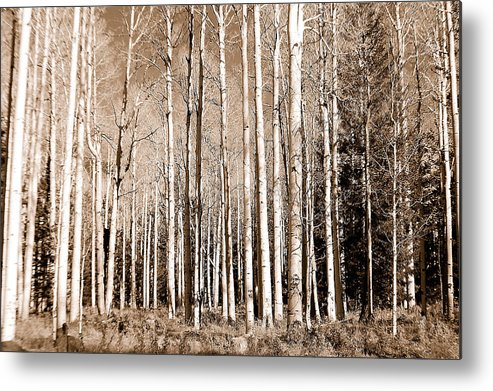 Aspens Metal Print featuring the photograph Aspens by Heather S Huston