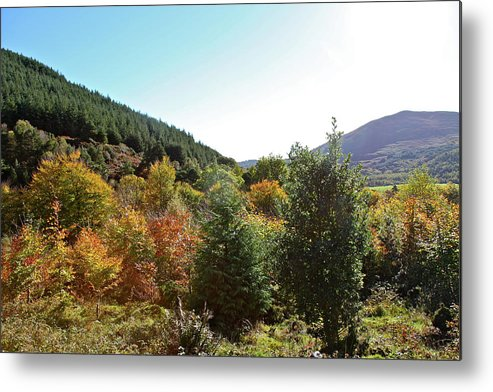Landscape/trees Metal Print featuring the photograph Autumn by Ann O Connell