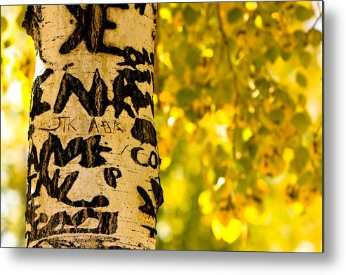 Aspens Metal Print featuring the photograph Autumn Carvings by James BO Insogna