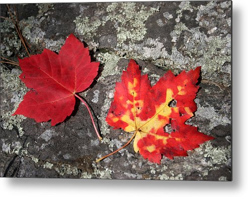 Tranquility Metal Print featuring the photograph Autumn Colors by Kate Leikin