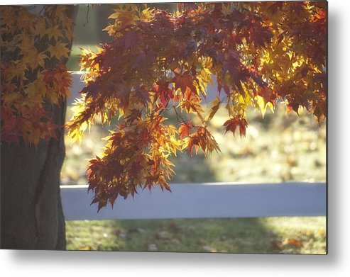 Autumn Metal Print featuring the photograph Autumn Elegance by Ross Powell