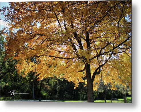 Outdoor Images Metal Print featuring the photograph Autumn Glow by Felipe Gomez