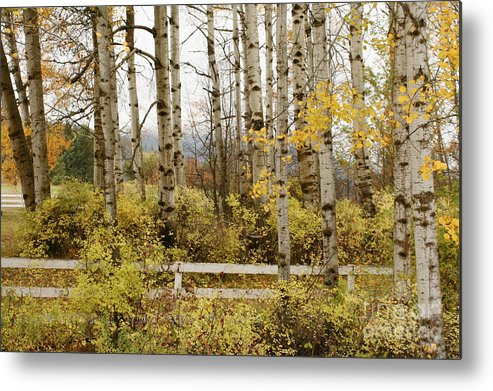Grove Metal Print featuring the photograph Autumn Grove by Idaho Scenic Images Linda Lantzy