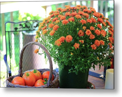 Autumn Harvest Metal Print featuring the photograph Autumn Harvest by PJQandFriends Photography