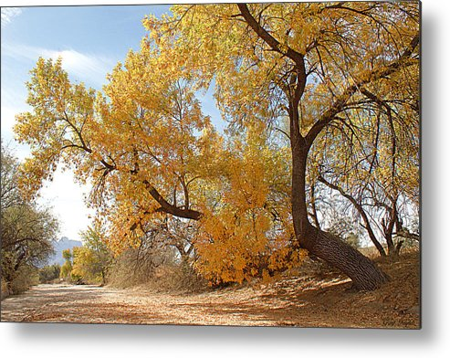 Autumn Metal Print featuring the photograph Autumn In Cdo Wash by Greg Taylor