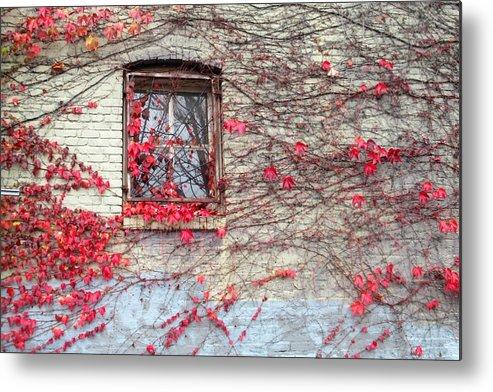Red Metal Print featuring the photograph Autumn Ivy by Karen Molenaar Terrell