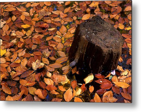 Autumn Metal Print featuring the photograph Autumn Leaves And Tree Stump by Barry Shaffer