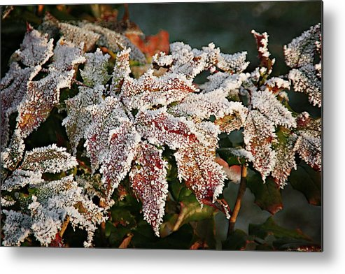 Fall Metal Print featuring the photograph Autumn Leaves In A Frozen Winter World by Christine Till