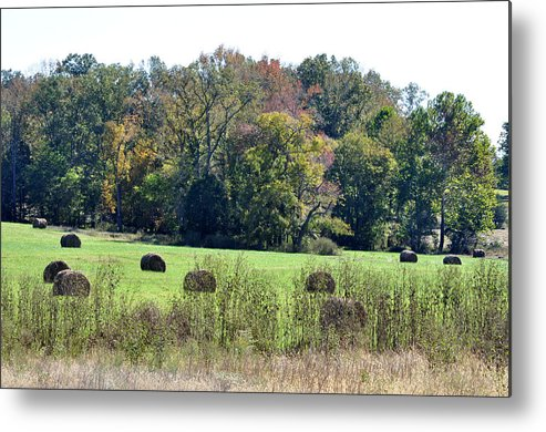 Landscapes Metal Print featuring the photograph Autumn Pastures by Jan Amiss Photography