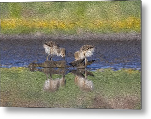 Babies Avocet Metal Print featuring the painting Avocet Babies by Jessica Nguyen