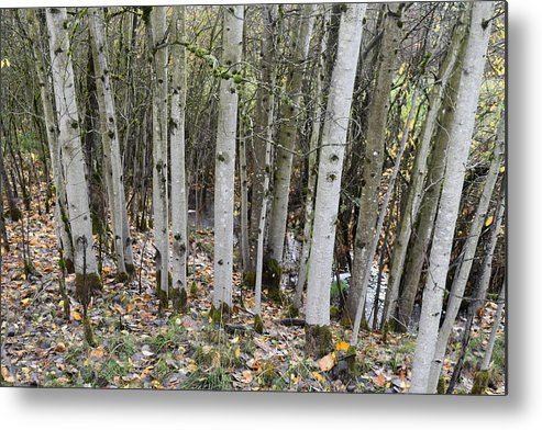 Trees Metal Print featuring the photograph Babbling Brook by Thomas Sexton