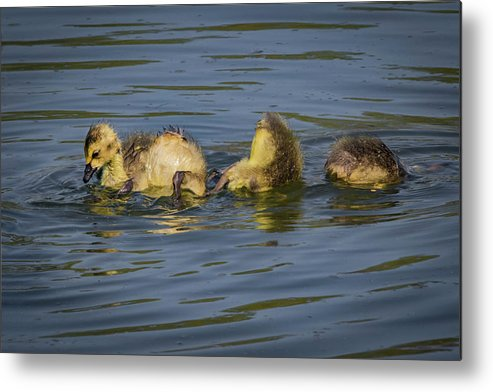Siblings Metal Print featuring the photograph Baby Pool by Ray Congrove