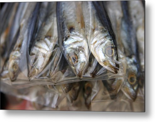Photographer Metal Print featuring the photograph Bag O' Fish 2 by Jez C Self