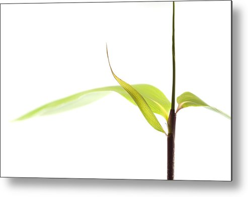 Minimalism Metal Print featuring the photograph Bamboo Meditation 1 by Carol Leigh