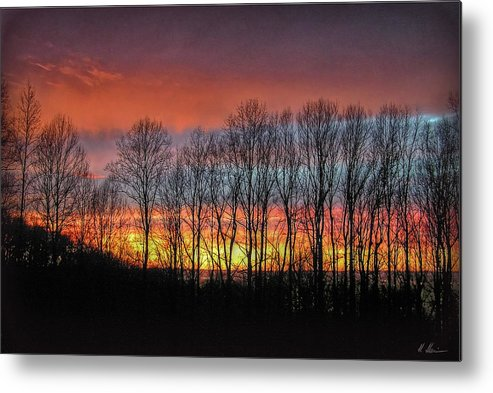 Trees Metal Print featuring the photograph Bare-branched Beauty by Hanny Heim