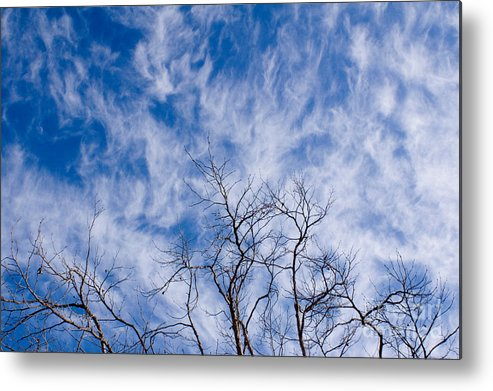Nature Metal Print featuring the photograph Bare Winter Branches In California by Julia Hiebaum